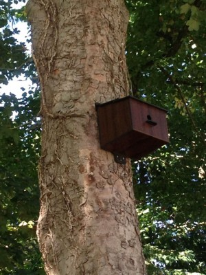 Faux Bird House Booster Repeater for Blocked Sewer Monitoring